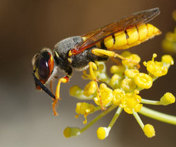 Why insects may be nature's most effective pesticide   Cultibotics   Scoop.it