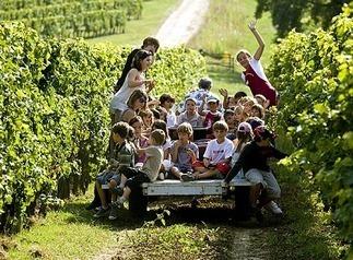 Pédagogie viticole : les petits à l'école de la vigne | Nouveaux comportements & accompagnement aux changements | Scoop.it