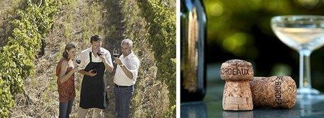 Bordeaux Primeurs: Les sites internet influencent aussi les prix | Autour du vin | Scoop.it