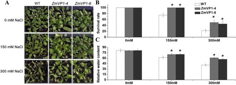 Heterologous expression of the halophyte Zoysia matrella H+-pyrophosphatase gene improved salt tolerance in Arabidopsis thaliana | Plant Genomics | Scoop.it