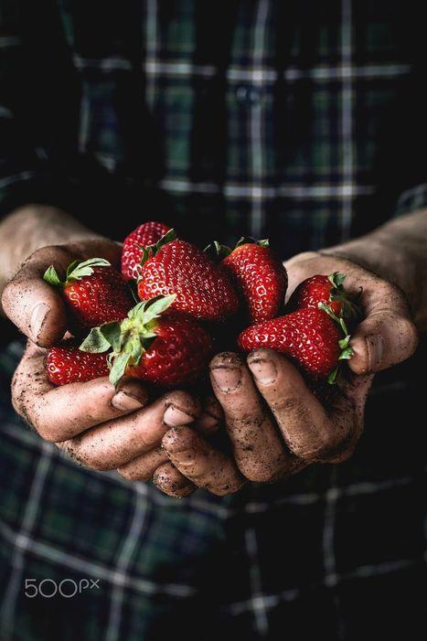 Man holding fresh strawberries by&nbsp;<br/>Vladislav Nosick | My Photo | Scoop.it