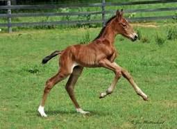 How Long Does Frozen Equine Semen Remain Fertile? | Equine Reproduction | Scoop.it