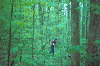Temperate Forests | Temperate Forest | Scoop.it