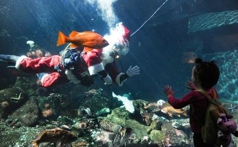It's the season for Scuba Claus! Ho Ho Ho! | Undersea Exploration | Scoop.it