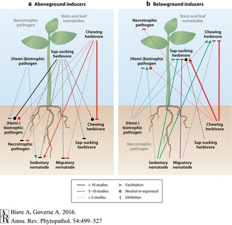 Plant-Mediated Systemic Interactions Between Pathogens, Parasitic Nematodes, and Herbivores Above- and Belowground - Annual Review of Phytopathology, | Plant immunity | Scoop.it