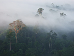The Prince's Rainforests Project | Why Rainforests Matter | Sae the Planet | Scoop.it