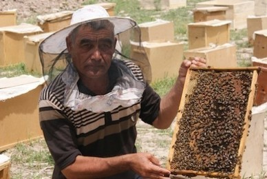 Ouzbékistan : L'apiculture utile aux communautés et l'environnement | UNDP | Abeilles, intoxications et informations | Scoop.it