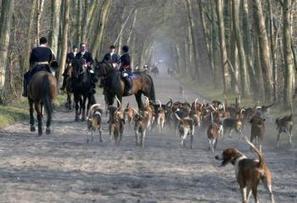 Faut-il interdire la chasse à courre ? | Chasse dans le Nord... et ailleurs | Scoop.it