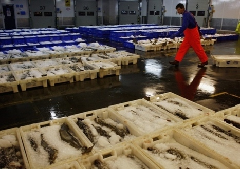 Stephen Jardine: What to do with Russia's fish? | Global Aquaculture News & Events | Scoop.it