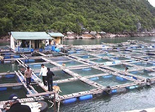 Asia-Pacific Dominates World Aquaculture, Accounts For Nearly 90% Of Fish Supply | Aquaculture | Scoop.it