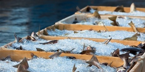 How technology is making it easier to track fish from hook to fork   Aquaculture Directory   Scoop.it