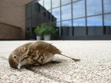 Las cristaleras son una trampa mortal para millones de aves - 20minutos.es | Casa NIDO - HOUSE NEST | Scoop.it