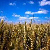 France - Le chiffre d'affaires de l'agriculture s'établit à 75 milliards d'euros   Questions de développement ...   Scoop.it