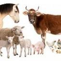 Best Farm Animals List | Pets Health | Scoop.it