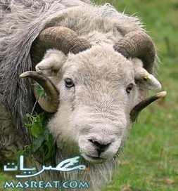 موعد عيد الاضحى 2012   رسائل حب   Scoop.it