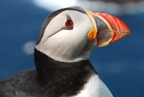 #BreakingNews!  #Plastic #pollution found inside dead #seabirds ~ Pls Keep our #Seas #Clean! | Rescue our Ocean's & it's species from Man's Pollution! | Scoop.it