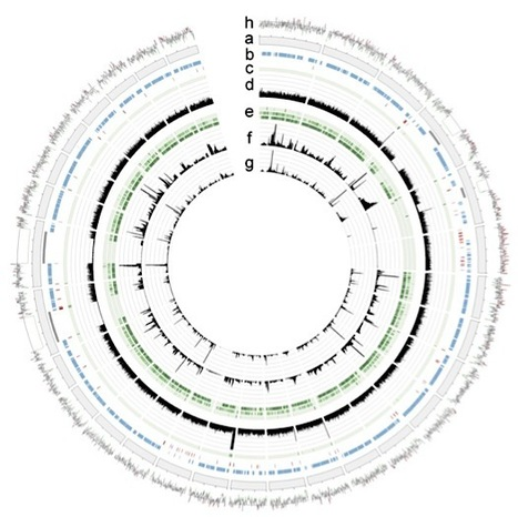PNAS: Genome of an arbuscular mycorrhizal fungus provides insight into the oldest plant symbiosis (2013) | Plant Pathogenomics | Scoop.it