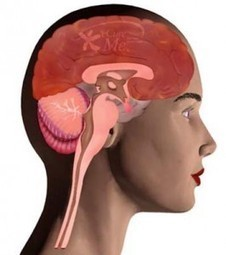 Encephalitis – Inflammation of the Brain Caused by Infection | Surviving Encephalitis | Scoop.it
