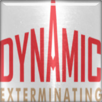 Carpenter Ants - Dynamic Exterminating Blog | Pest Control | Scoop.it