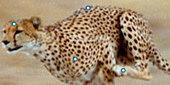 Interactives & Games | Nature | PBS | Recursos para CLIL | Scoop.it