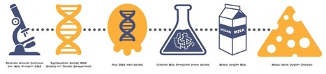 Biohackers reengineering baker's yeast to make vegan cheese | leapmind | Scoop.it