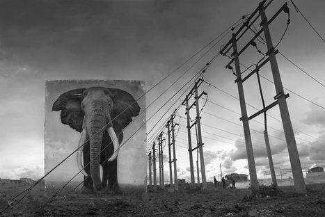 Inherit the Dust – Installer des portraits d'animaux dans leurs habitats dévastés | Bouche à Oreille | Scoop.it