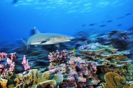 "Pacific Nation Bans Fishing in One of World's Largest Marine Parks (""another Pacific fish sanctuary"") 