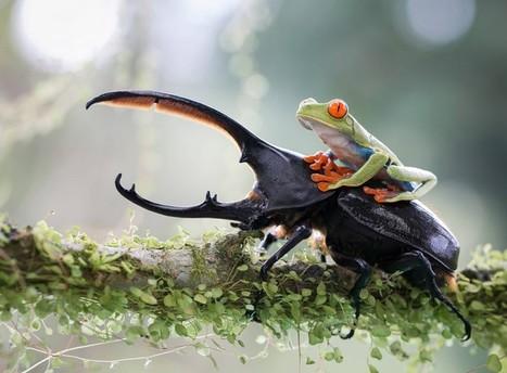 50 photos hallucinantes qui capturent des moments extraordinaires de la nature sauvage. | Au hasard | Scoop.it