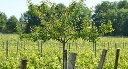 Vin bio et biodiversité : Domaine Emile Grelier | World Wine Web | Scoop.it