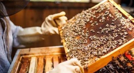 La lumière infrarouge peut sauver nos abeilles des néonicotinoïdes | Sustain Our Earth | Scoop.it