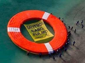 Positivo que Greenpeace abanderare defensa de Cabo Pulmo: PT   Activismo en la RED   Scoop.it