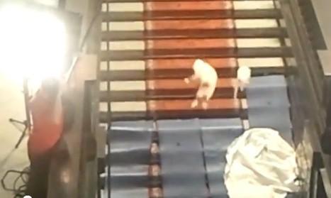 Met katten gooien voor de kunst: kan dat? - EditieNL | Futuremuseumnl | Scoop.it