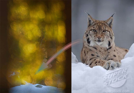 Swedish Nature Photographer of the Year Exposed as Fraud | Xposed | Scoop.it