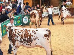 « Ohhh la vache ! » L'agriculture tient salon à Pontivy | Les animations autour du lycée Le Gros Chêne | Scoop.it