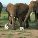When Elephants Attack | Business Tips for SMEs | Scoop.it
