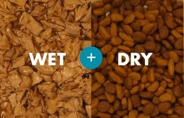 Dry or Wet Food: Which is The Best Option For Your Dog? | Pets – Your Little Friends | Scoop.it