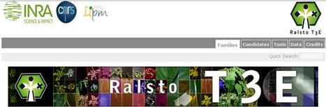 BMC Genomics: Repertoire, unified nomenclature and evolution of the Type III effector gene set in the Ralstonia solanacearum species complex (2013) | Effectors and Plant Immunity | Scoop.it
