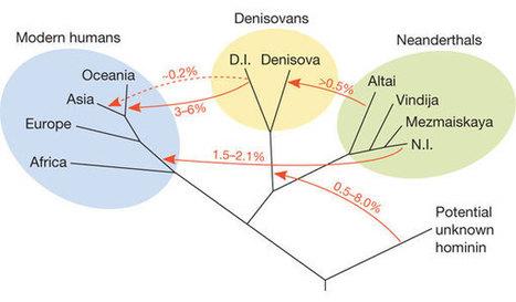 Teen van Neanderthaler maakt onze geschiedenis een stuk ingewikkelder - Scientias.nl | KAP_VerdaetS | Scoop.it