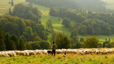 Harmony with Nature ? | Bien commun-Biens communs | Scoop.it