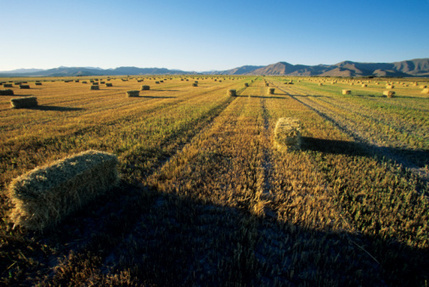 Farmer lobby groups call for NBN fibre | agribusiness | Scoop.it