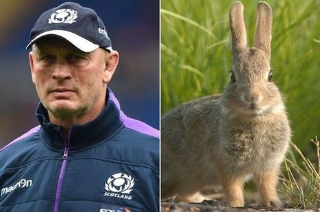 Scottish rugby coach 'made players kill rabbits with their bare hands' | Plant Based Transitions | Scoop.it