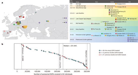 Massive migration from the steppe was a source for Indo-European languages in Europe : Nature | plant cell genetics | Scoop.it