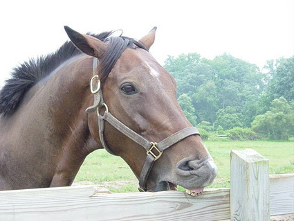Cribbing: What It Is and How to Deal With It | Horse and Rider Awareness | Scoop.it