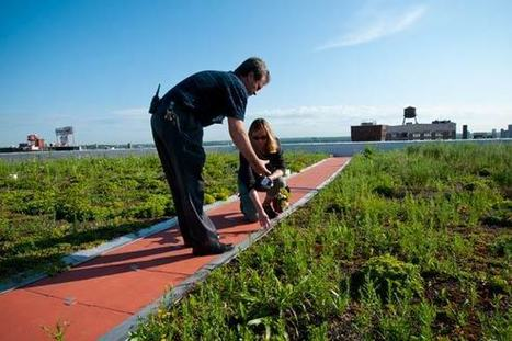 Target Center's green roof: a prairie in the sky | Sustainable Urban Agriculture | Scoop.it