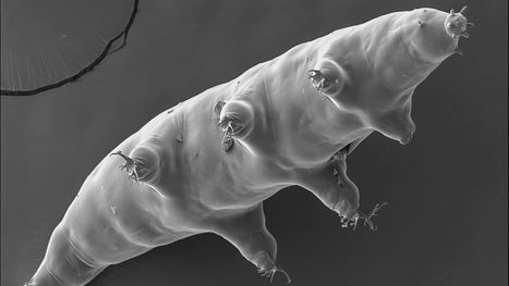 'Radiation shield' found hidden in water bear genome | bioremediation | Scoop.it