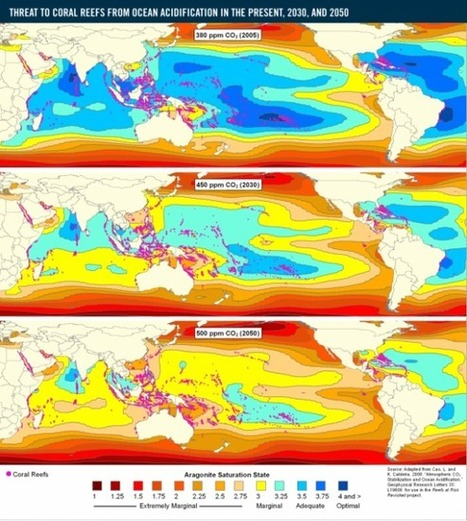 Ocean Acidification:  The Complete Loss of Tropical Coral Reefs By 2050 to 2100 | GarryRogers NatCon News | Scoop.it