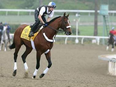 Ocala-bred horse up for Horse of the Year honors | Horse Racing News | Scoop.it
