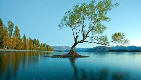Des forêts tropicales aux fjords : découvrez l'incroyable diversité de la Nouvelle-Zélande | The Blog's Revue by OlivierSC | Scoop.it