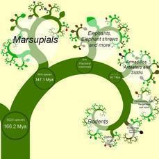 El primer árbol de la vida en internet | luisrodevia | Scoop.it