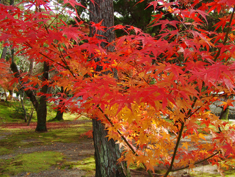 Savourer l'automne - Maison de la culture du Japon à Paris | japon | Scoop.it
